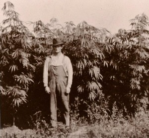 3_History_Lessons_of_Medical_Cannabis
